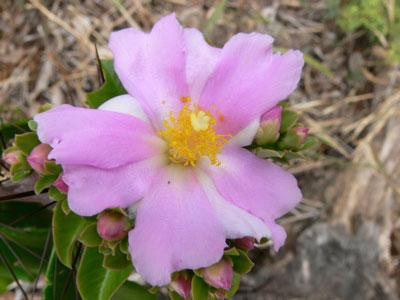 original image of flower