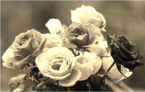 sepia tone applied to the flowers photo