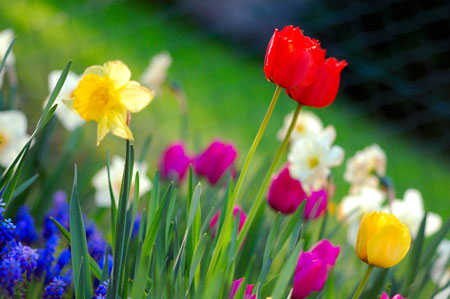 spring garden original image